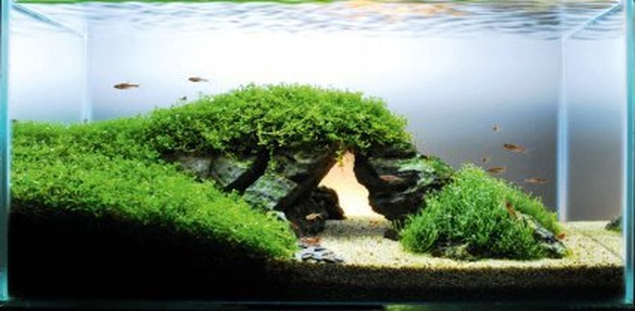 Amazing Aquascape Gallery Ideas That You Never Seen Before