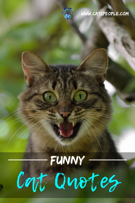 20 Funny Cat Quotes Cat Quotes Funny Cat Parenting Funny Cats