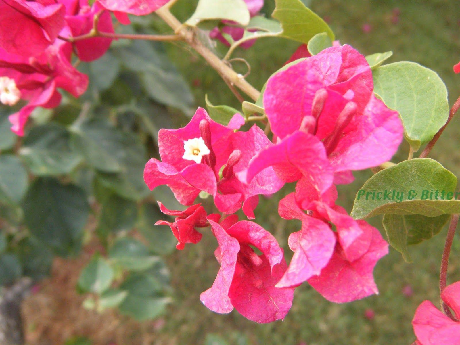 When a flower isn't a flower part 1 Parts of a flower