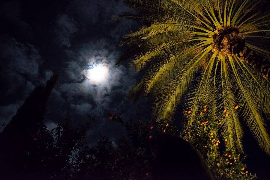 Cyprus 2013  Photo by Misha Romanoff
