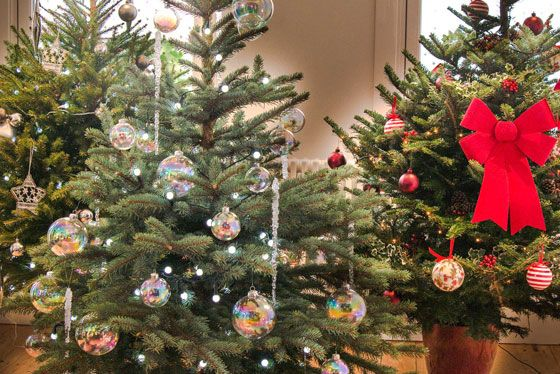 British grown trees to rent and buy in Greater London, can be collected and  repotted after the end of the festive season! |Christmas ... - Lovely Branches: The Ethical Route To Buying A Real Tree. British