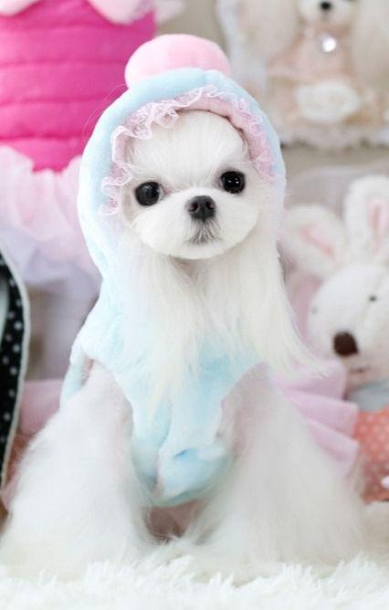 Princess Dress Pet Products Cute Cat Dog Puppy Clothes Warm Dog