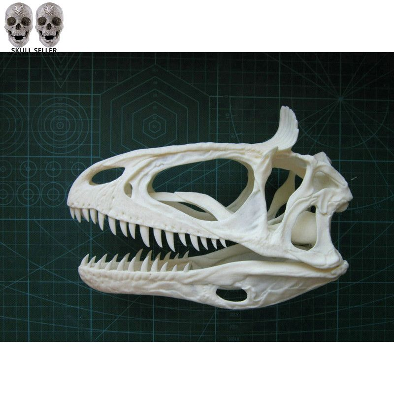 P-Flame 1/3 Cryolophosaurus Dinosaur Resin Fossil Skull Model For Decoration Collectibles Factory Direct Sales Customizable