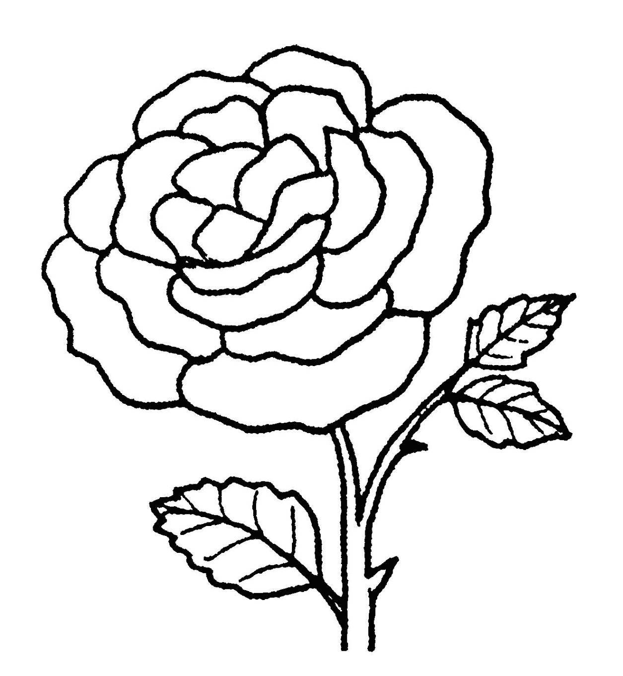 Gambar Bunga Cempaka Sketsa Sketsa Bunga Bunga Sketsa