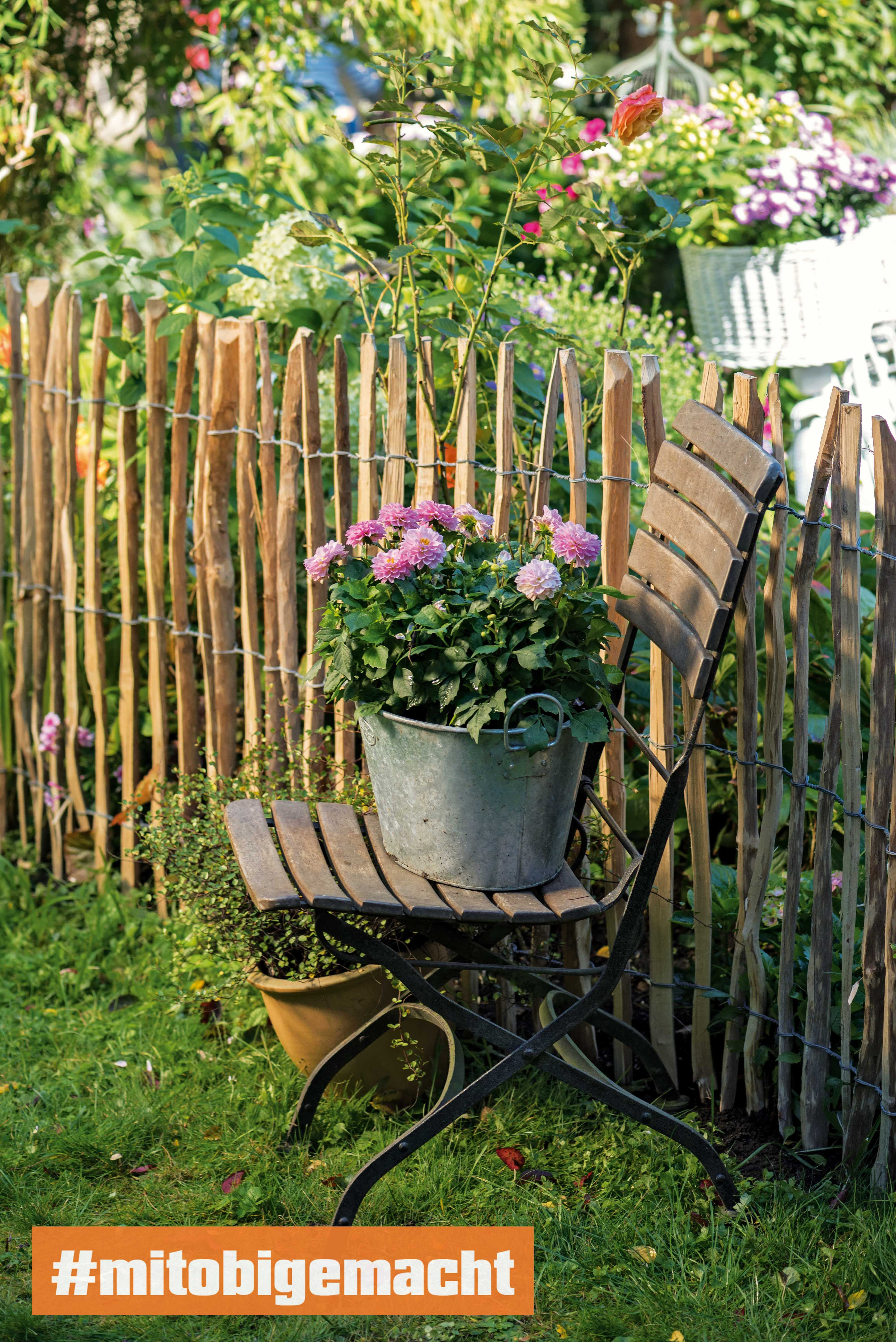 Topfrosen Der Pflege Und Pflanzenratgeber Obi Pflanzen Garten Garten Planen