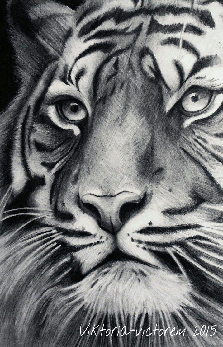 Tiger by Victoria-victorem on DeviantArt