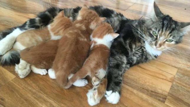 Newborn kittens rescued from drycleaning machine in