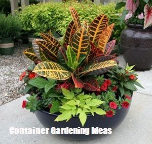 Container Gardening Ideas For Your Home is part of Container gardening, Garden vines, Plants, Garden, Garden plants, Container gardening flowers - Container Gardening Ideas For Your Home  Owe Crafts