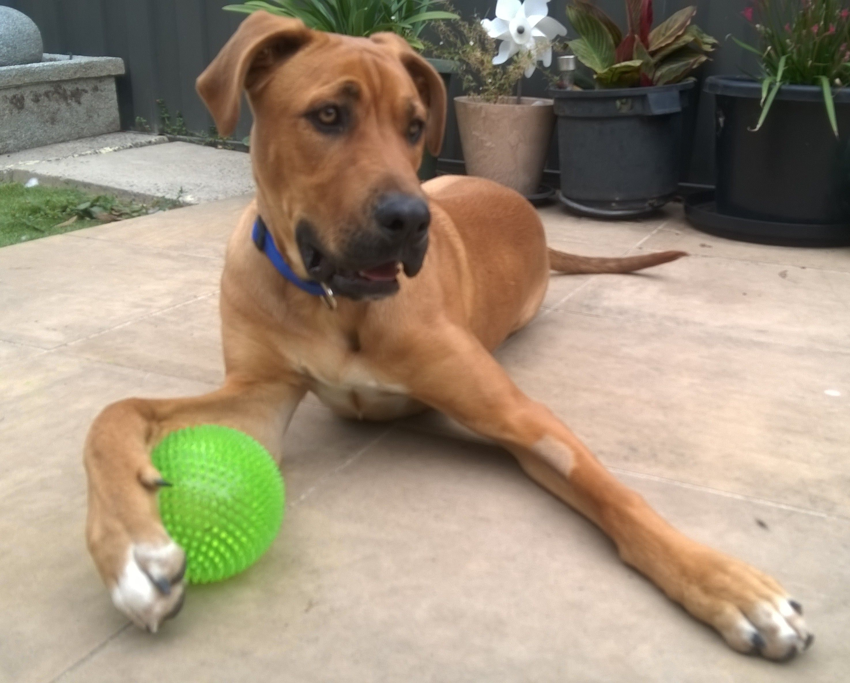 It S My Ball Happy Animals Dogs Puppies Cute Animals