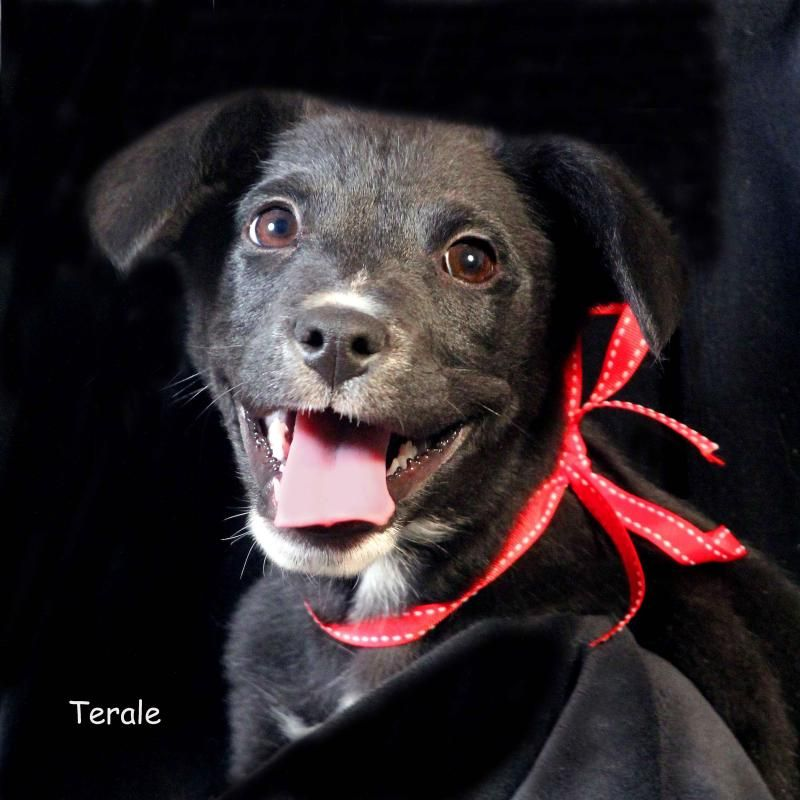 Adopt Terale On Animal Welfare Society Border Collie Mix Pets