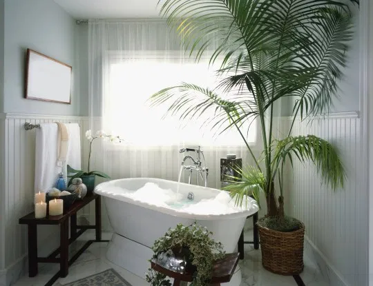 Photo of The best plants to put in your bathroom