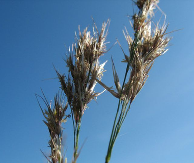 Being willing to plant a new type of grain could get you a grant.