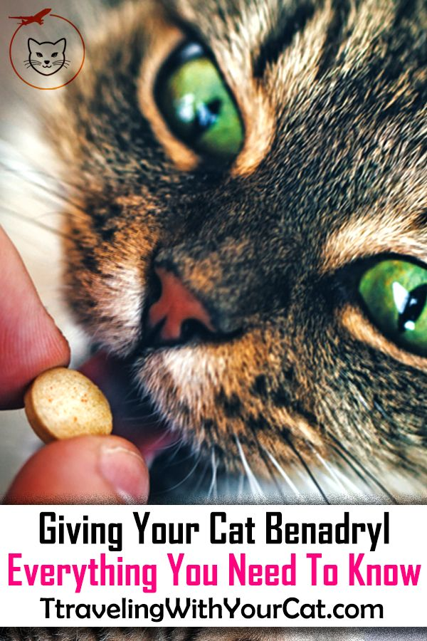 Giving Your Cat Benadryl Everything You Need To Know