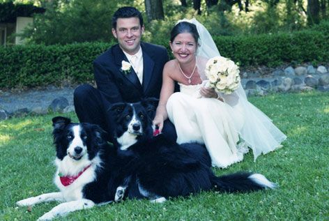 Border Collie Ring Bearers I Will So Do This With My Two If I