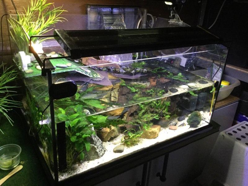 red eared slider tank ideas Google Search Turtle tank