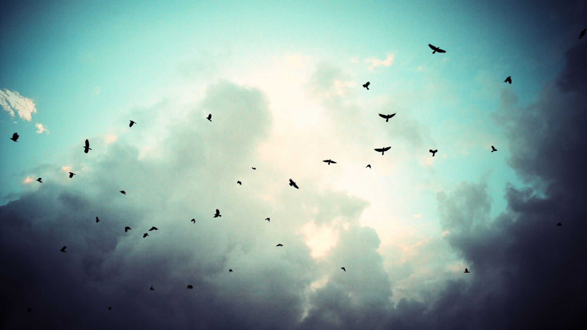 birds flying in cloudy sky hd wallpapers (With images