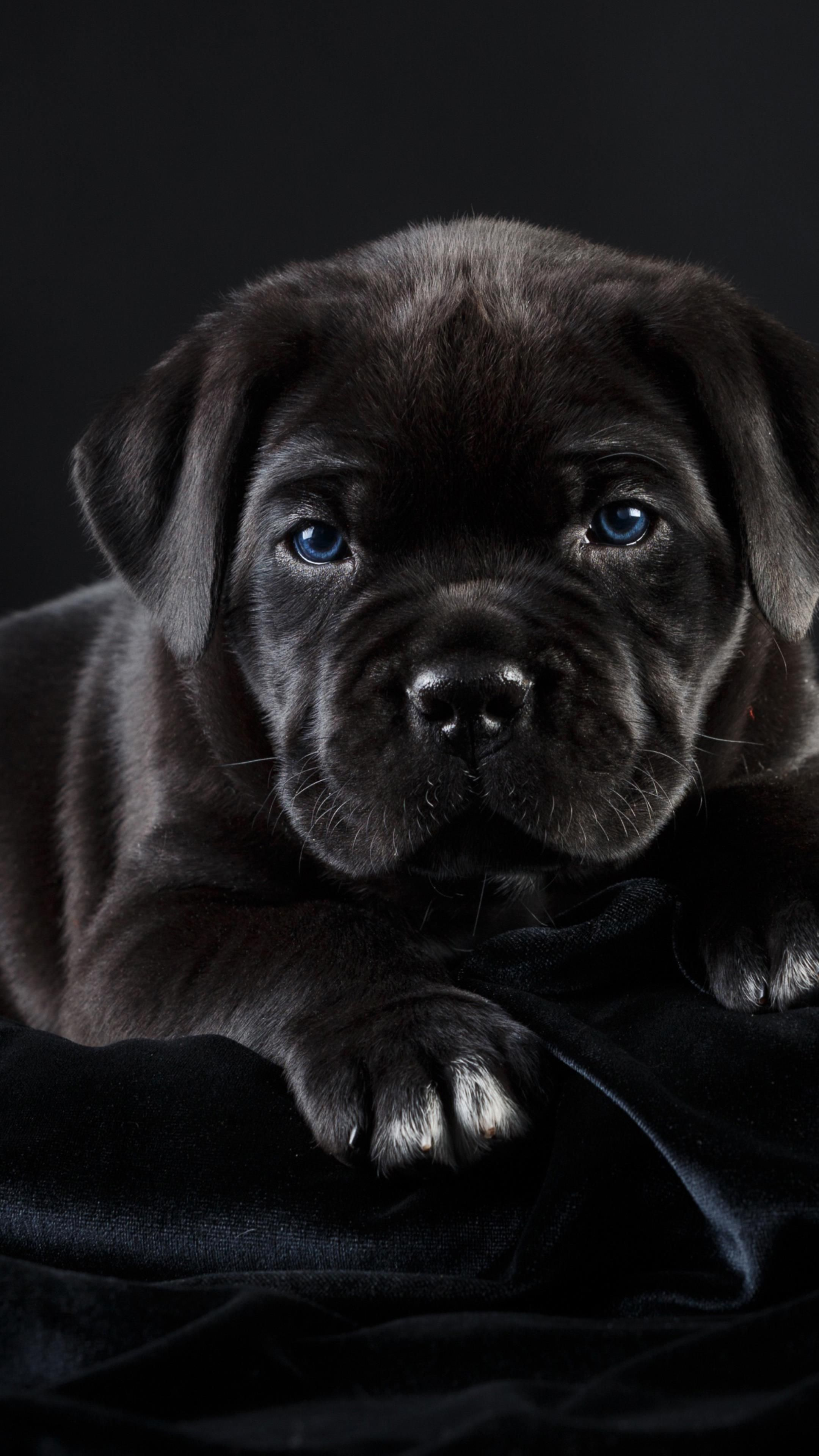 Amoled Animal Wallpaper Cute Puppy Wallpaper My Animal Dog Pictures