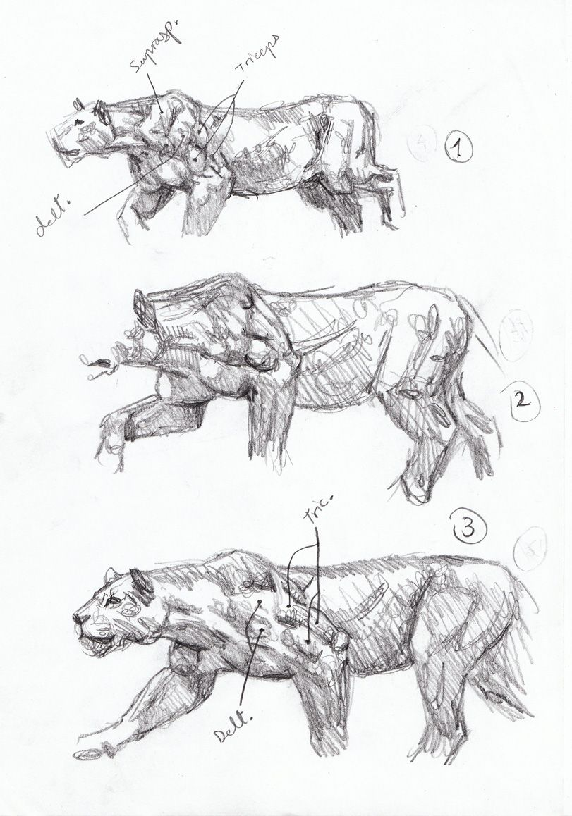 Sabertooth Diaries 3: big cat action sketches   Animal ...