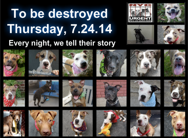 To Be Destroyed 07 24 14 Pitties Are In Danger Again There Are Far Too Many Today All These Dogs Count On Us Let S N Animals Pet Adoption Dog Adoption