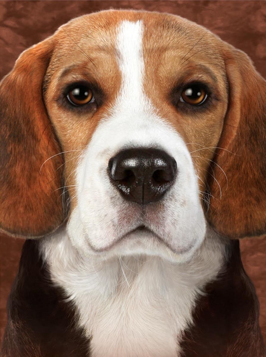 5 99 Gbp 3d Picture Dogs Beagle Head And Shoulders Size 39 X 29