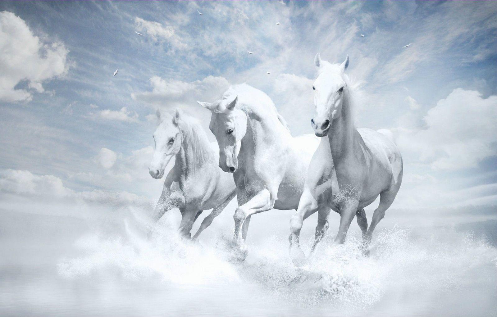Framed Print White Horses Running Through The Water Picture Poster Animal Art Horse Wallpaper Horses White Horses