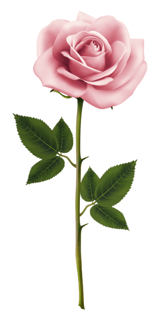 Realistic Pink Rose Flower Clipart Pink Rose Png Flower Clipart Rose Clipart