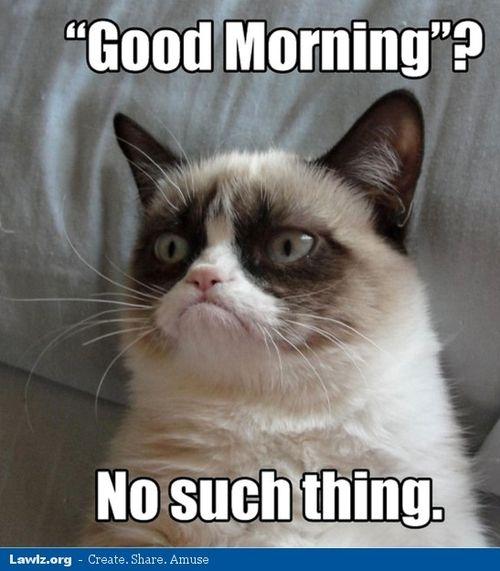 Grumpy Cat Meme No Grumpy Cat Meme Good Morning No Such Thing Large Funny Grumpy Cat Memes Grumpy Cat Humor Grumpy Cat Quotes