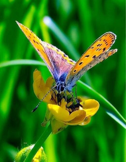 """Hearts in Nature Butterfly 