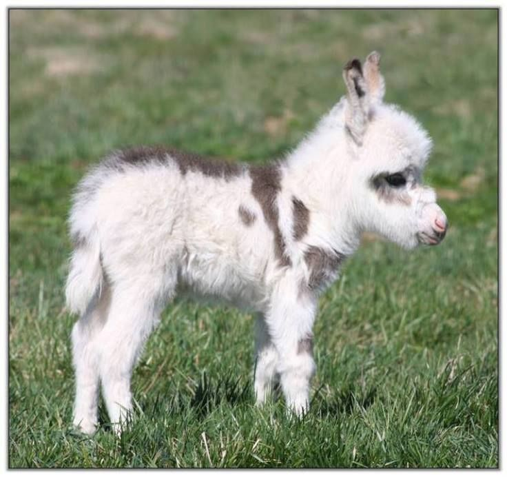 These Cute Baby Animals Will Melt Your Heart Mini Donkey - 28 cute baby animals will melt heart