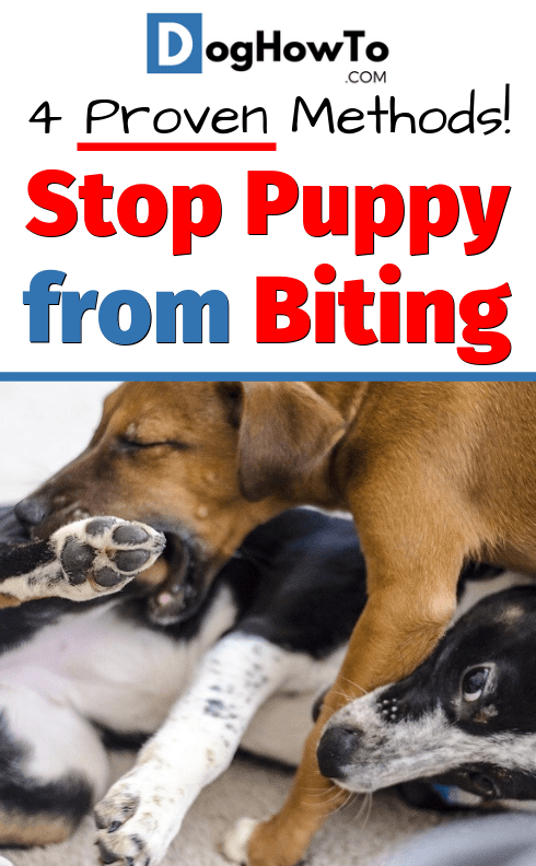 How To Stop Your Puppy From Biting Stop Puppy From Biting Puppy Training Biting Puppy Biting