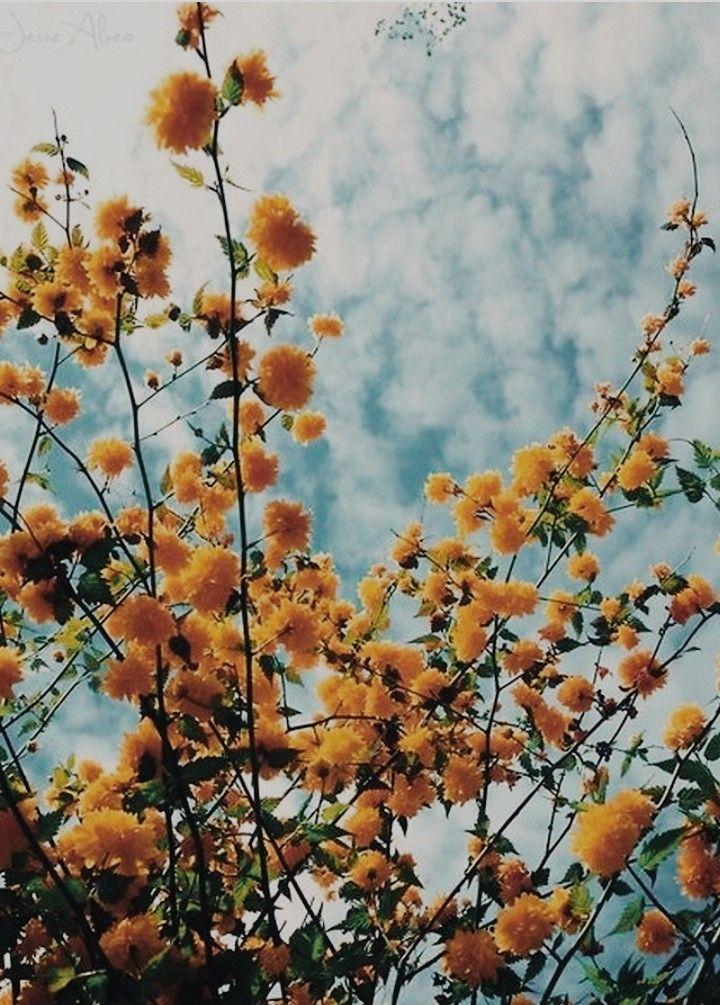 Vintage Hintergrund Blumen
