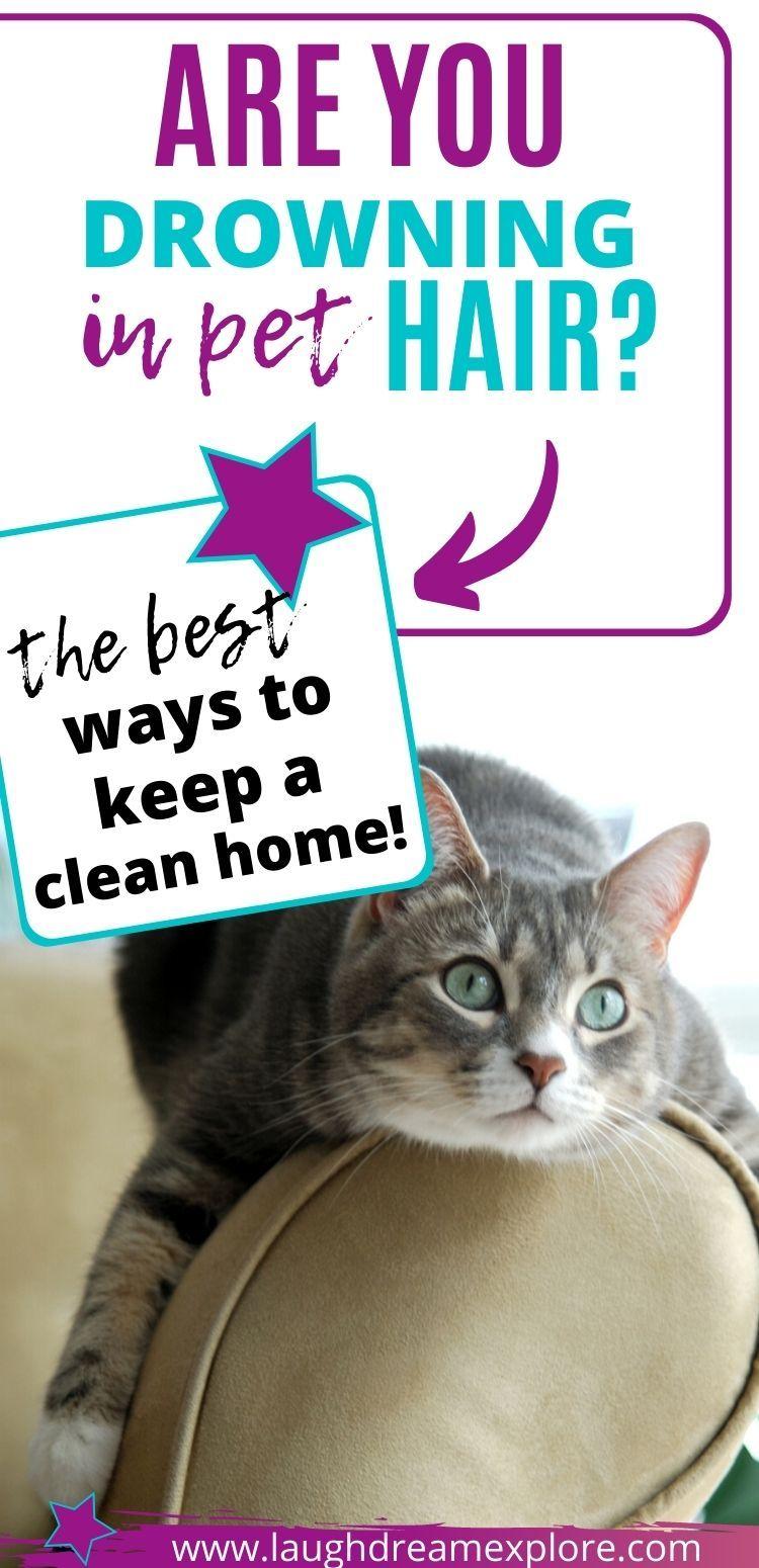 Pet Hair Cleaning Hacks! in 2020 Cleaning pet hair, Pet
