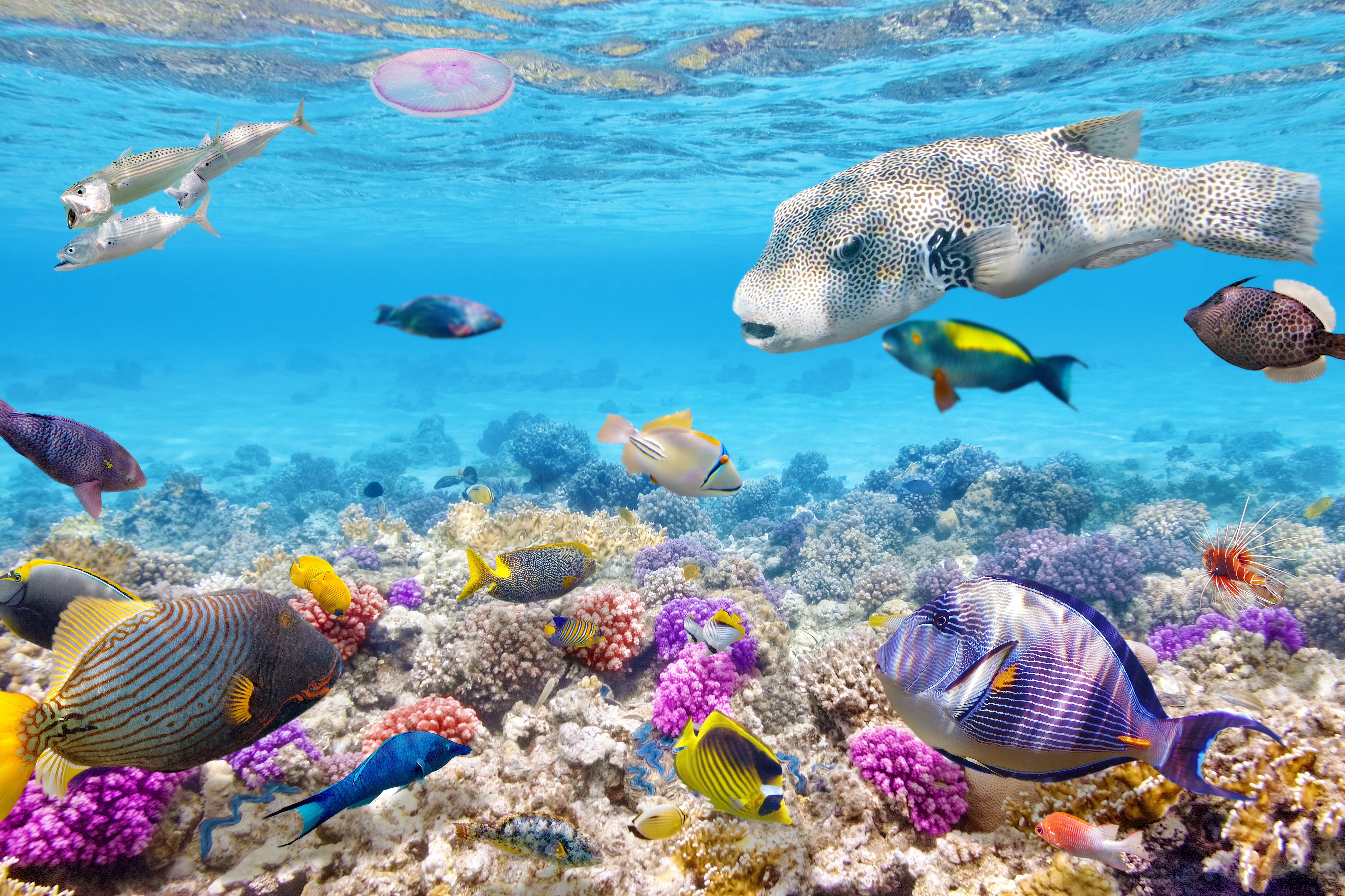 9000x6000 Cool Fish Fotos