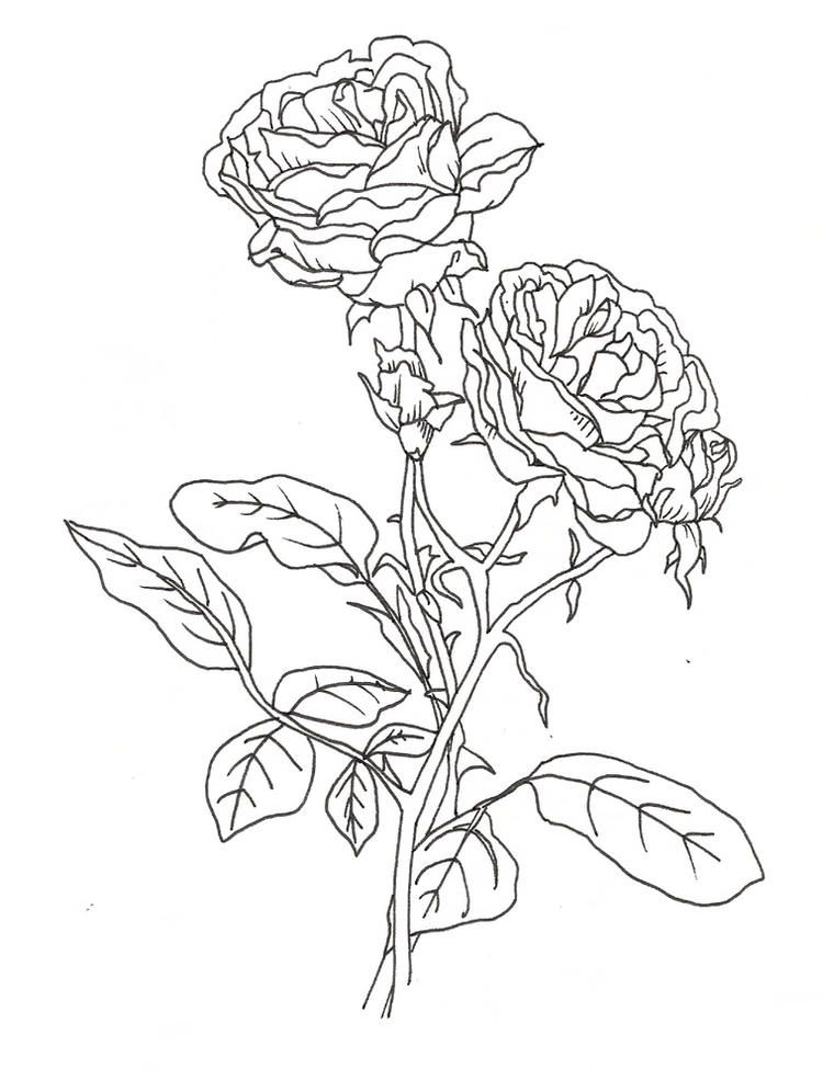 Pretty Coloring Pages Of Roses Rose coloring pages