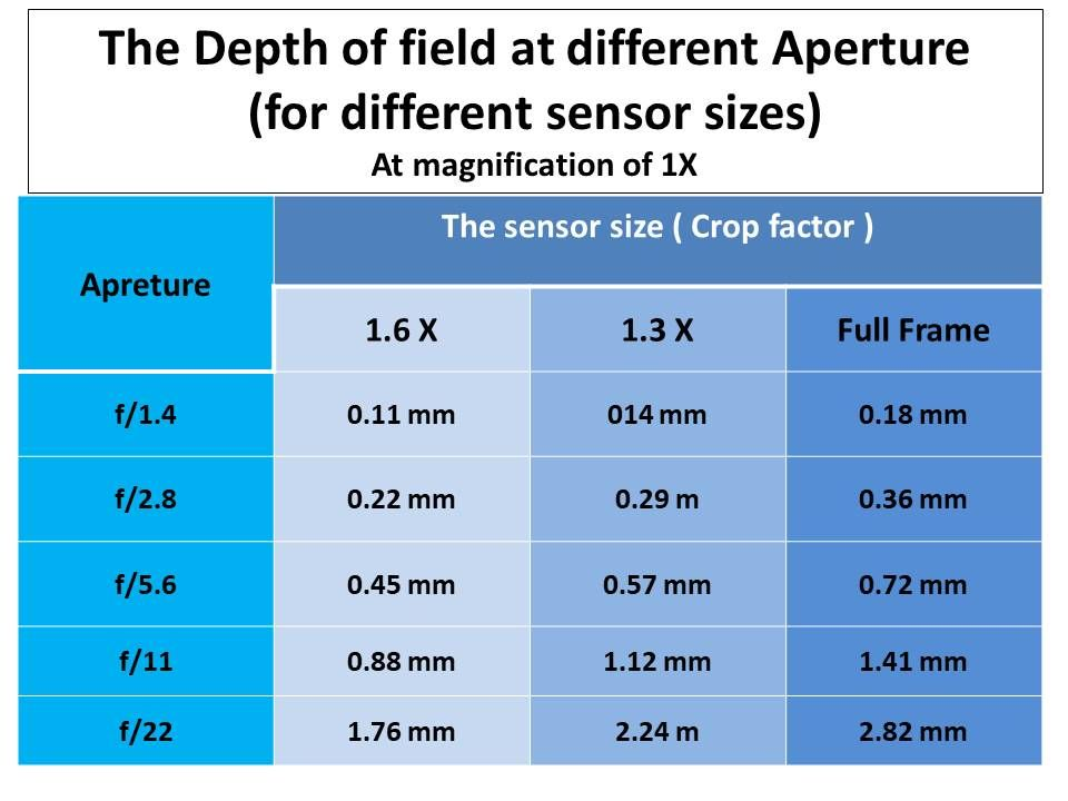The Macro Lenses Explained Samples Recommendations Macro Lens Lenses Macro