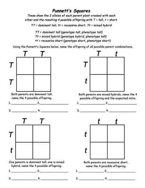 Genetics Info And Punnett Square Activity For Kids With Images