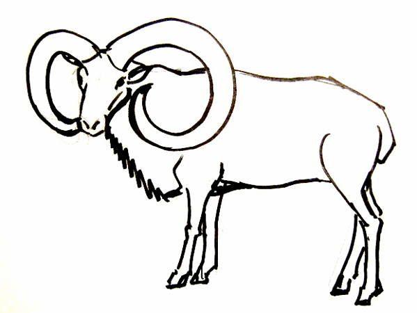 Ram Drawing