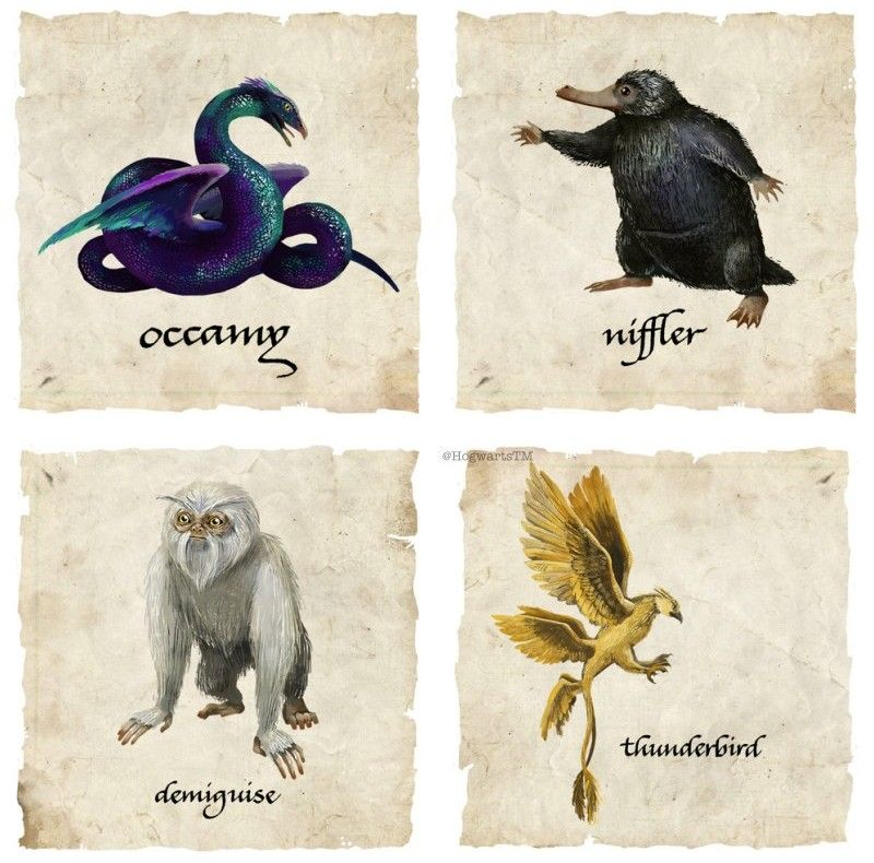 Pin By Helena Ravenclaw On Aesthetics Fantastic Beasts Harry Potter Fantastic Beasts Fantastic Beasts And Where