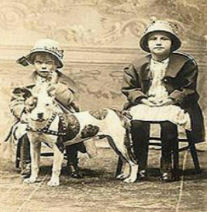 17+ images about Vintage Pit Bull on Pinterest  |American Pit Bull Terrier Vintage