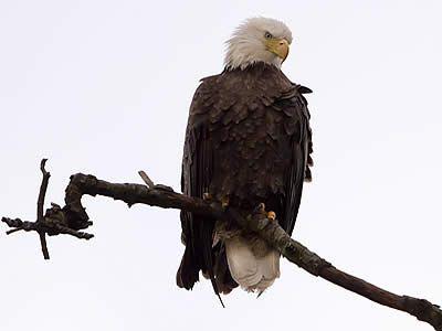 BERRY COLLEGE EAGLE CAM. C: