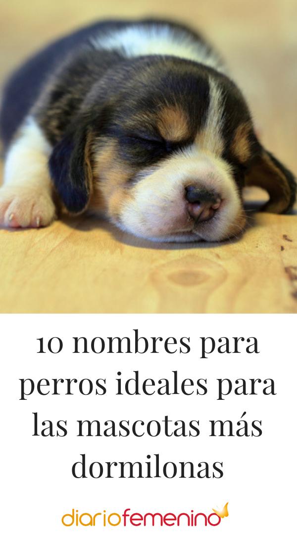Photo of 10 nombres para perros ideales para las mascotas más dormilonas
