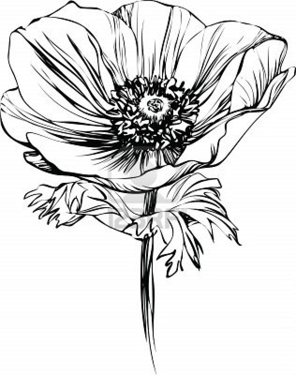 Pin by Lori Watts on Line/Ink images for mugs Poppy