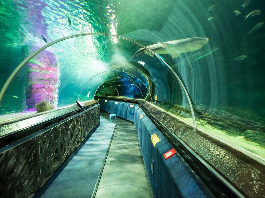 νεα ζηλανδια Video Pinterest: Shark Tunnel In Kelly Tarlton's Sea Life Aquarium