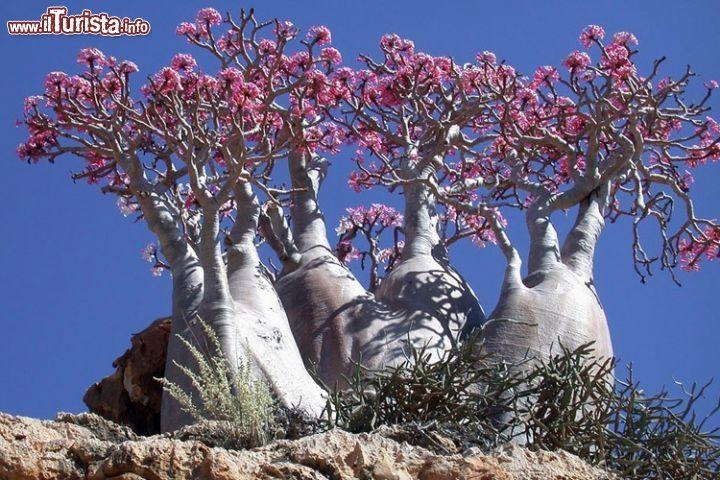 alberi incredibili - Cerca con Google
