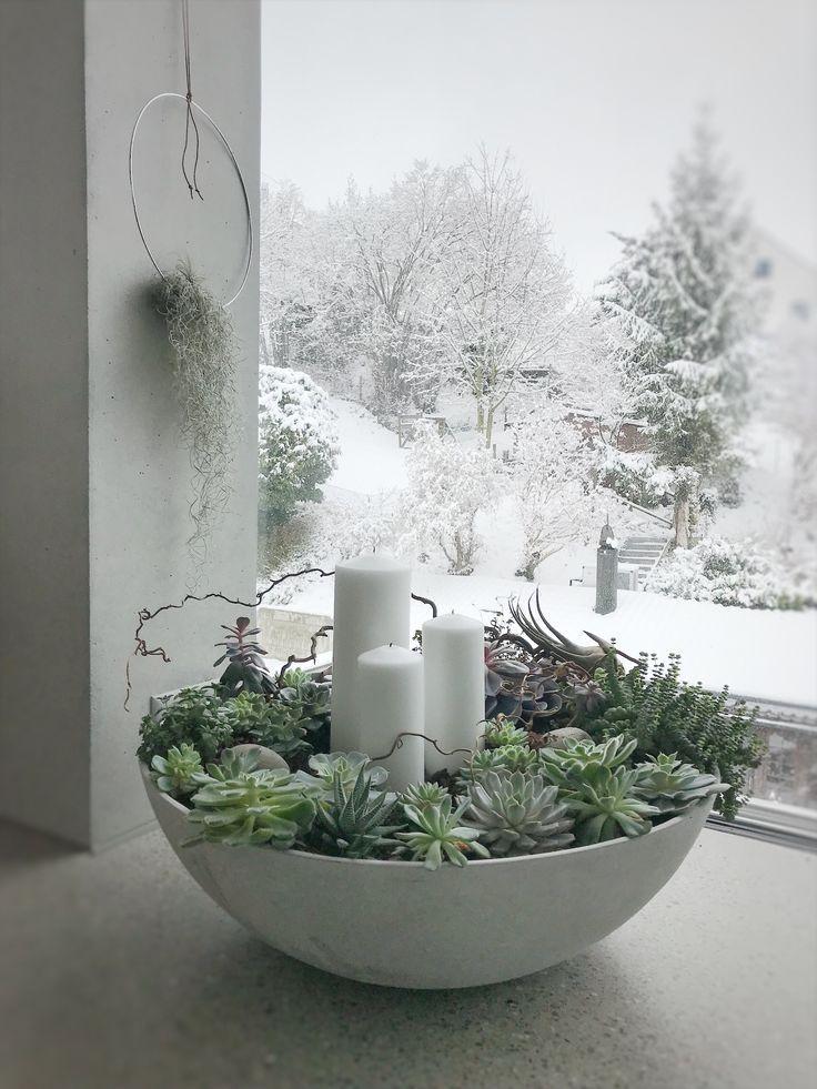 Sukkulenten in einer Betonschale im winterlichen S - Blumen Natur Ideen #wintergardening