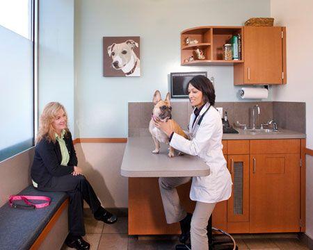Veterinary Hospital Exam Room Pet Clinic Vet Clinics Hospital
