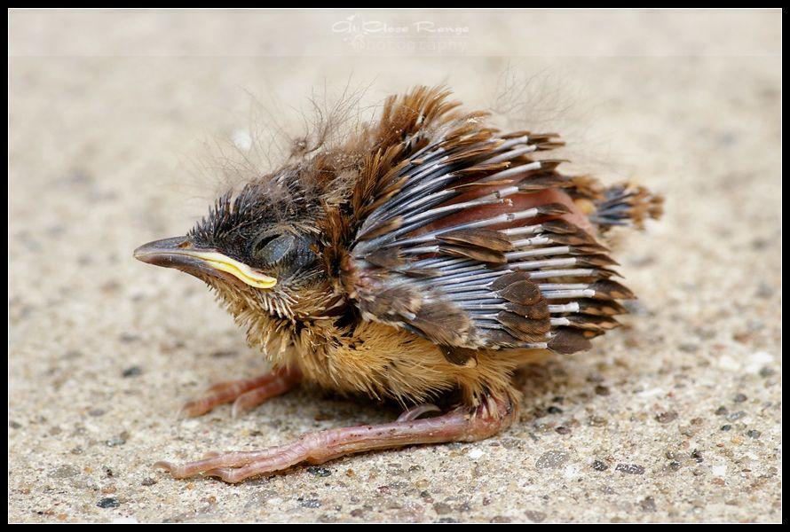 Peepers   Baby bird, Peepers, Animals