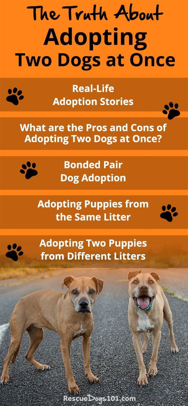 The Truth About Adopting Two Dogs at Once Two dogs, Dogs
