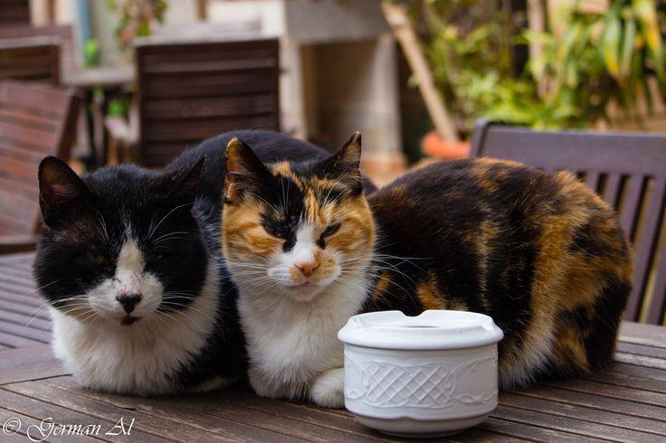 Cat family photo by German Aljabjev on 500px