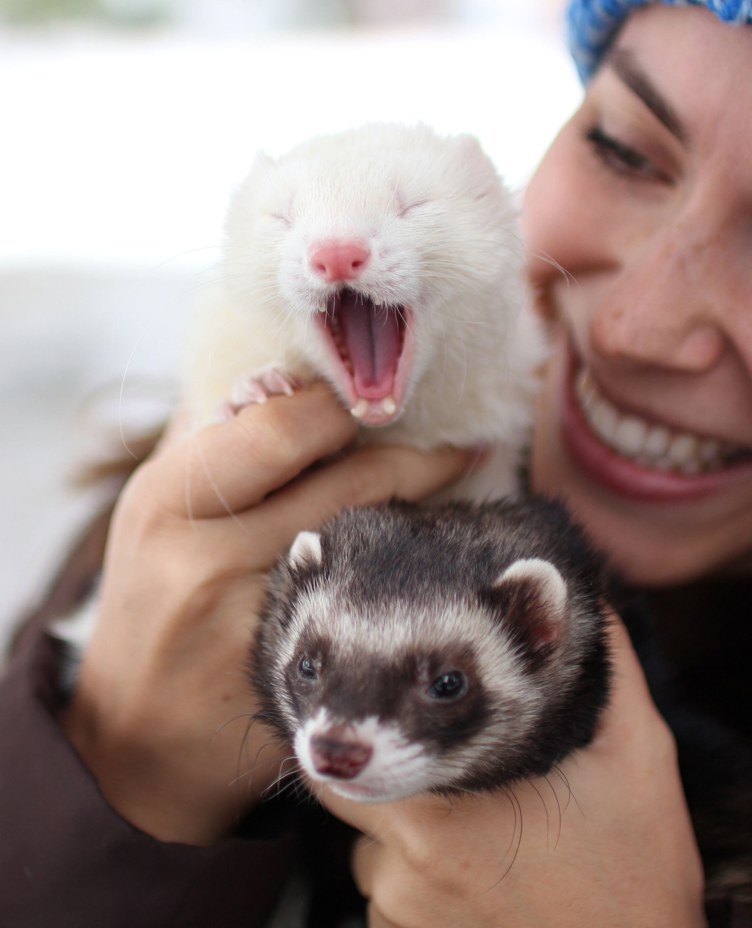 Giant 2020 Ferret Calendar In 2020 Ferret Cute Ferrets Animals